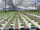 Hà Nội muốn ứng dụng công nghệ cao vào sản xuất nông nghiệp