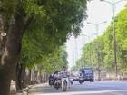 Hà Nội: Tốn hàng chục triệu di chuyển 1 cây xà cừ nhưng chưa biết trồng ở đâu