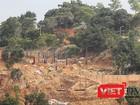 """Dự án """"băm"""" bán đảo Sơn Trà: Sở NN&PTNT cho """"chặt cây"""" để... tận thu củi!"""