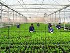 Quyết tâm giải bài toán cho vay trong lĩnh vực nông nghiệp công nghệ cao