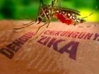 Virut Zika đã xuất hiện tại 11 tỉnh, thành trên cả nước