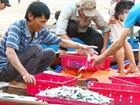 Bộ Tài chính đã cấp 4.700/11.500 tỷ cho 4 tỉnh miền Trung