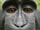 Ảnh selfie của một chú khỉ có thể sẽ định đoạt tương lai của bản quyền AI