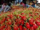 Xuất khẩu nông sản 10 tháng đạt 12,5 tỷ USD