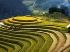 Mê đắm sắc vàng rực rỡ của ruộng bậc thang Hoàng Su Phì