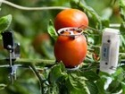 Lần đầu tổ chức thi khởi nghiệp về giải pháp công nghệ cho nông nghiệp