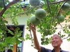 Cuộc sống điền viên của nguyên Phó Thủ tướng Trương Vĩnh Trọng (video)