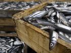 Báo Nga: Bộ Nông nghiệp Việt Nam quan tâm đến việc nuôi cá ở vùng Leningrad