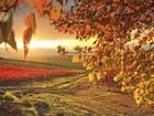 Tuyệt đẹp cảnh sắc mùa thu trên khắp nước Mỹ