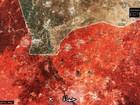 """""""Hổ Syria"""" chiếm thị trấn phiến quân, 12.000 lính Assad quyết đấu phe thánh chiến"""
