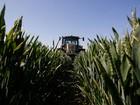 Monsanto đặt cược vào trí tuệ nhân tạo để bảo vệ cây trồng