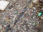 Hoang mang do cá biển chết trắng dọc 4 tỉnh miền Trung
