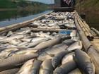 Buốt ruột cá chết nằm như ngả rạ trên sông Bưởi