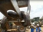 Bắt được trăn khổng lồ thân to cả mét, nặng 400kg
