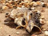 Lặn biển truy tìm ống xả nước thải của Formosa làm chết cá ở miền Trung