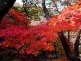 """Video: Sự quyến rũ """"chết người"""" của thời khắc lá phong đỏ ở Triều Tiên"""