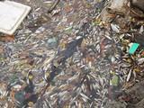 Vụ cá chết: Formosa nhập hóa chất cực độc súc xả đường ống