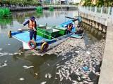 Cá chết hàng loạt trên kênh TP HCM do ô nhiễm sau mưa đầu mùa