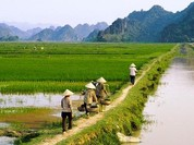 Đề nghị giảm 34,3 tỷ đồng thuế nông nghiệp cho nông dân