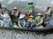 Hà Nội cần thêm thời gian để tìm hiểu nguyên nhân cá chết Hồ Tây