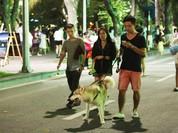 Bảo đảm an toàn cho du khách, Hà Nội cấm chó không rọ mõm vào phố đi bộ