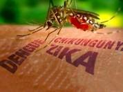 Hà Nội chủ động phòng dịch Zika