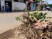Hà Nội nghiêm cấm các quận, huyện tự ý dịch chuyển cây xanh