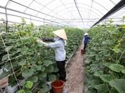 Hà Nội: Doanh nghiệp rộng cửa vay vốn phát triển nông nghiệp ứng dụng công nghệ cao