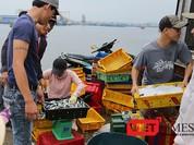 Cá chết ở miền Trung: Đà Nẵng xem xét hỗ trợ tiền cho ngư dân