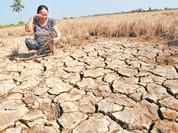 Đề xuất hỗ trợ 100% phí bảo hiểm cây lúa, cây cà phê cho hộ nghèo