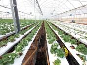 Gói tín dụng cho nông nghiệp công nghệ cao có lãi suất thấp hơn từ 0,5-1,5%