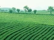 Đề xuất quy định mới về miễn, giảm thuế sử dụng đất nông nghiệp