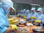Australia cấm nhập tôm xanh, tôm nguyên liệu từ châu Á và Việt Nam