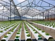 Dự án nông nghiệp ứng dụng công nghệ cao sẽ được vay vốn ưu đãi