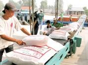 """Vụ """"mất 20.000 USD để xuất khẩu gạo"""": có thể xử lý hình sự nếu phát hiện sai phạm"""
