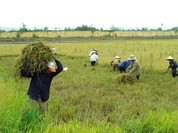 Quy định mới về miễn thuế đất nông nghiệp