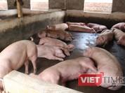 Giá thịt lợn ở các chợ Hà Nội vẫn ở mức 65.000đ - 80.000đ/kg