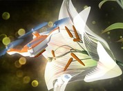 Dùng máy bay siêu nhỏ để thụ phấn hoa