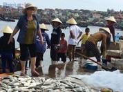 Thanh Hóa: Cá lồng chết hàng loạt tại Nghi Sơn