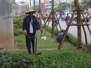 Hà Nội cho cắt cỏ trang trí trở lại, sau 3 tháng tạm dừng