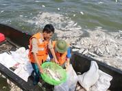 Khẩn trương tìm ra nguyên nhân cá chết và kiểm tra chặt việc xả thải quanh Hồ Tây