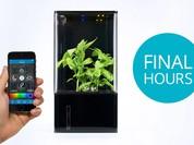 Video: Hộp trồng cây tự động, theo dõi qua smartphone