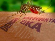 Thêm một ca nhiễm Zika tại TP Hồ Chí Minh