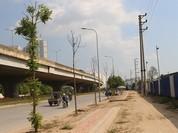 Hà Nội: Gần 100 cây xanh chết khô trên đường Nguyễn Xiển
