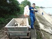 Cá chết hồ Linh Đàm: Không phải do nguồn nước ô nhiễm