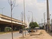 Hà Nội: Truy trách nhiệm đơn vị để cây xanh chết
