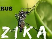 Bình Dương tăng cường phòng, chống dịch do virus Zika đến tận xã, phường