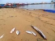 Hà Tĩnh bắt đầu trả bồi thường sự cố môi trường biển