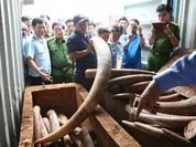Điều tra làm rõ việc buôn lậu ngà voi tại cửa khẩu Cảng Sài Gòn.