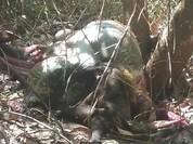 Đồng Nai: Bò tót quý hiếm bị xẻo thịt